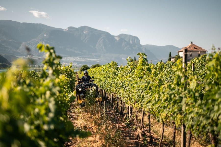 vineyard-flailmower
